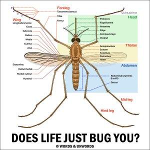 Mosquito Bite Diagram