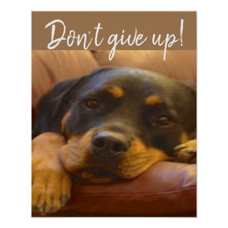 Don't Give Up! Says Sammy our Rottweiler