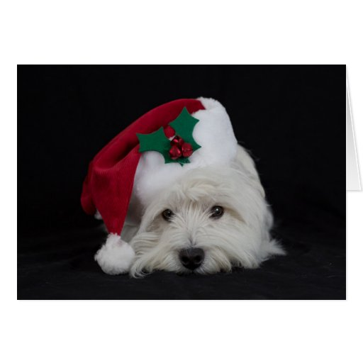 Dreamer The Pesky Westie Christmas Card Zazzle