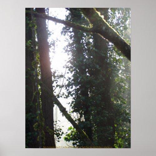 Early Morning Sun Rays # 17 print