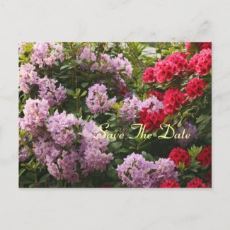 Elegant Rhododendron Save The Day Postcard postcard