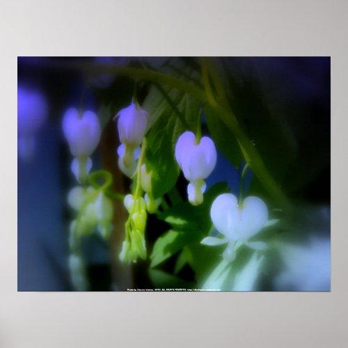 elegant white bleeding hearts, blue print