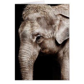 Elephant Photo Image Card