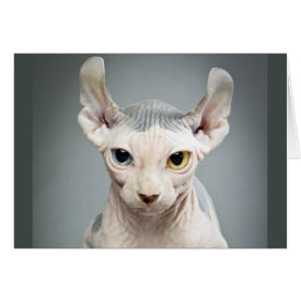 Elf Sphinx Cat Photograph Card