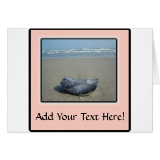 Emerald Isle Shell Closeup Card