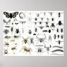 Entomology, Myriapoda and Arachnida Print