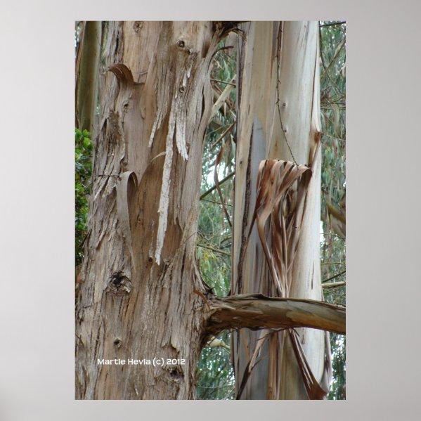 Eucalyptus Bark Posters