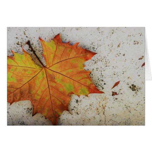 Fall Leaf Photo Greeting Card