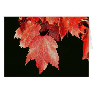Fall Leaves Greeting Cards