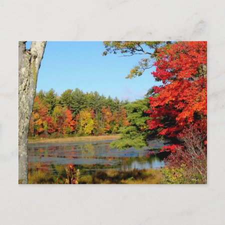 Fall Trees In New England Postcards postcard