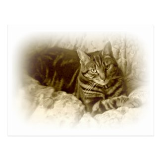 Fine Art Cat Photo in Sepia Postcard