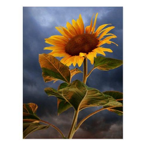 Floral Sunflower Blue & Yellow Flowers Hello Love Postcard