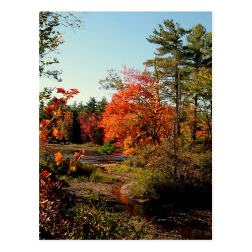 Foliage Season New England Postcards