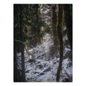 Forest Sun Rays in the Snow #24 print