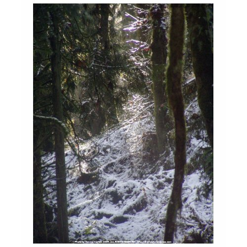 Forest Sun Rays in the Snow #24 shirt