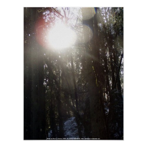 Forest Sun Rays in the Snow #50 print
