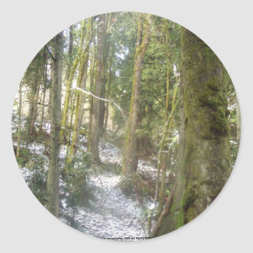Forest Sun Rays in the Snow #54 sticker