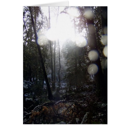 Forest Sun Rays in the Snow #64 card