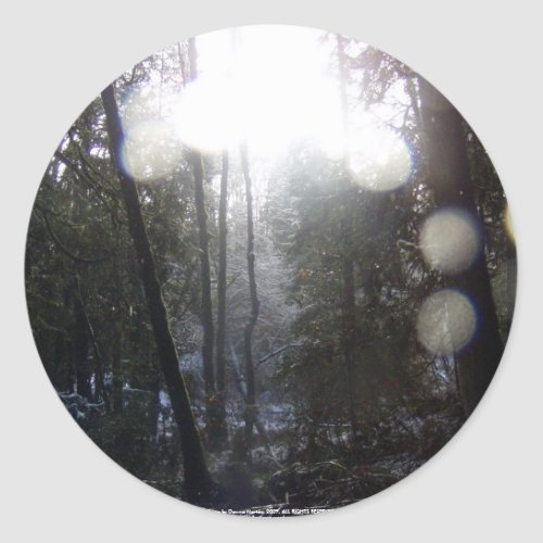 Forest Sun Rays in the Snow #64 sticker