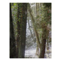 Forest Sun Rays in the Snow #6 print