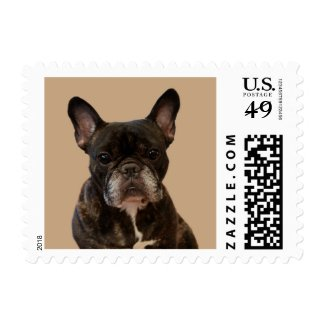 French Bulldog Postage Stamp