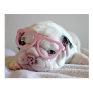 French bulldog white cub Glasses, lying on white Post Cards