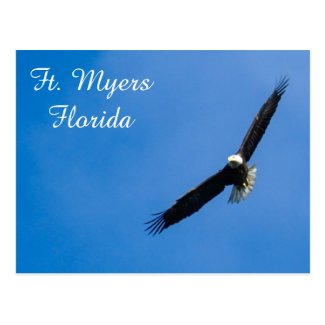 Ft. Myers Bald Eagle postcard