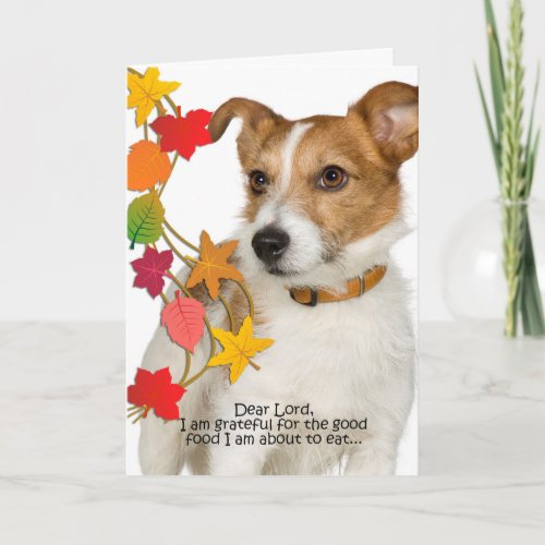 Funny Jack Russell Thanksgiving Card