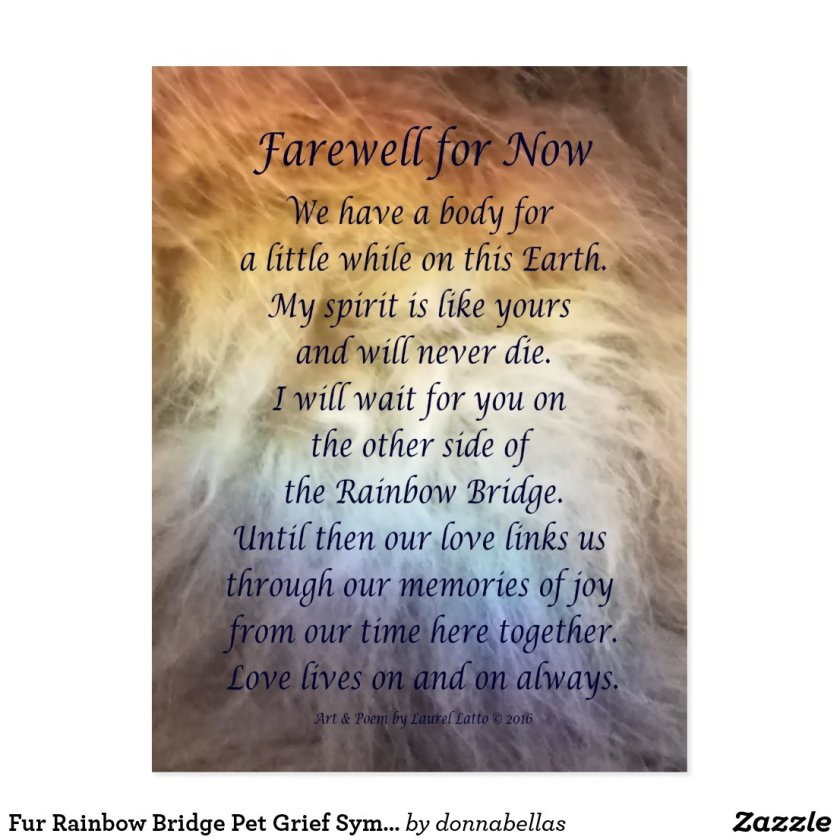 Fur Rainbow Bridge Pet Grief Sympathy Postcards