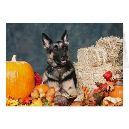 German Shepherd Thanksgiving Eating