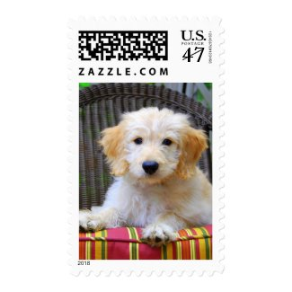 Golden Doodle Puppy Postage