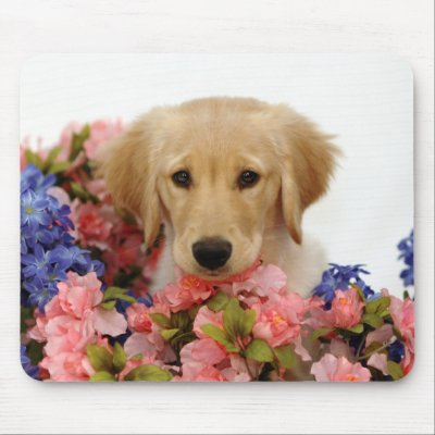browser troubles ganga visit puppies flowers. reply
