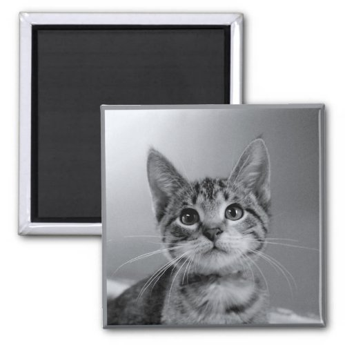 Gray Tabby Kitten Magnet magnet