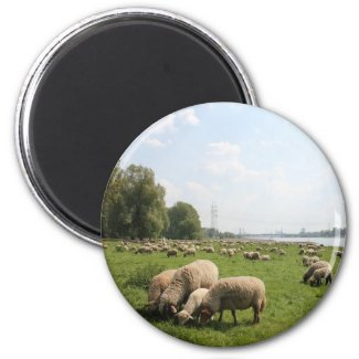 Grazing Sheep by the Rhine Magnets