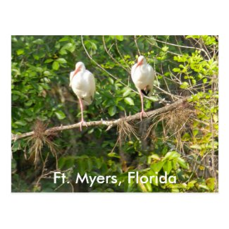 Greetings from Florida! Postcard