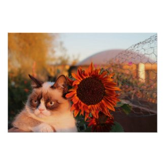 Grumpy Cat Sunflower Poster