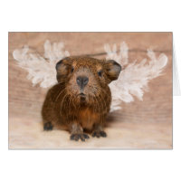 Guinea Pig Angel Card