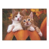 Halloween Kitties Card
