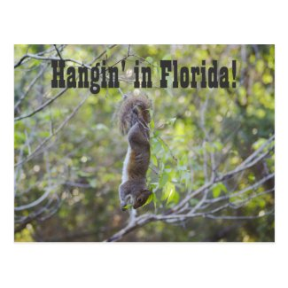 Hangin' in Florida Postcard