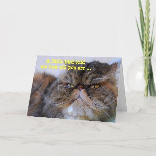 Happy Birthday Humor Calico Persian Kitty Card card