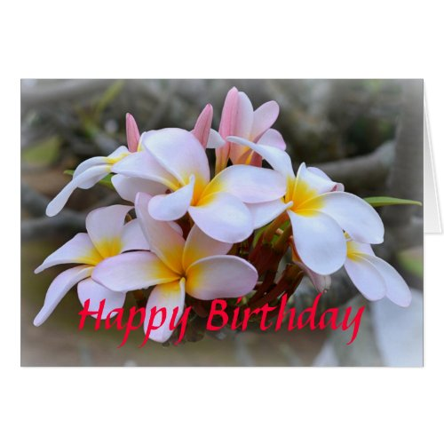 Happy Birthday White and Pink Plumeria, Pink
