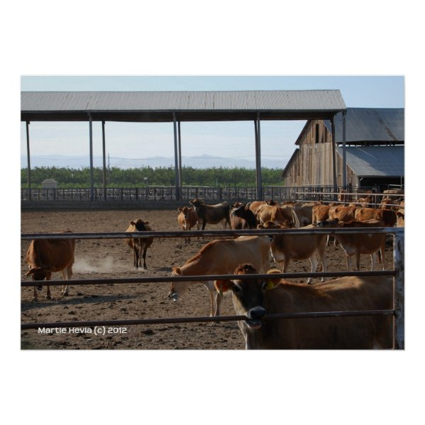 Happy California Cows Print