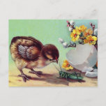 Baby Chick With Grasshopper Spring Postcard