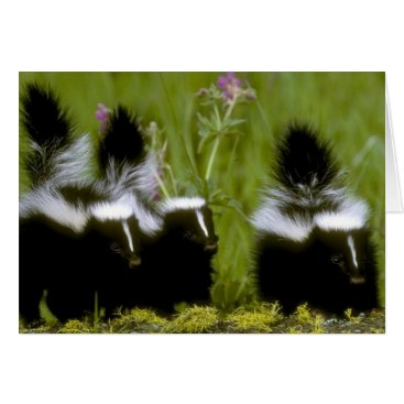 Happy Mother's day Skunk Card