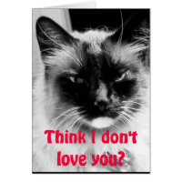 Happy Valentine's Day from the Cat Humor Card