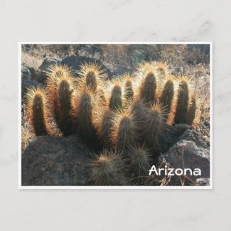 Hedgehog cactus in desert habitat postcard