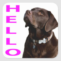 Hello Black Brown Labrador Retriever Sticker Label