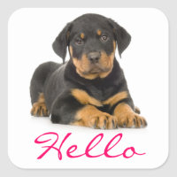 Hello Rottweiler Puppy Dog - Thinking of You Square Sticker