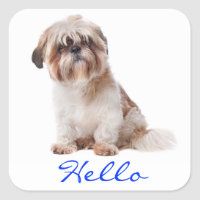 Hello White Shih Tzu Puppy Dog Greeting Stickers