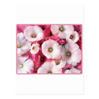 Hibiscus Post Cards